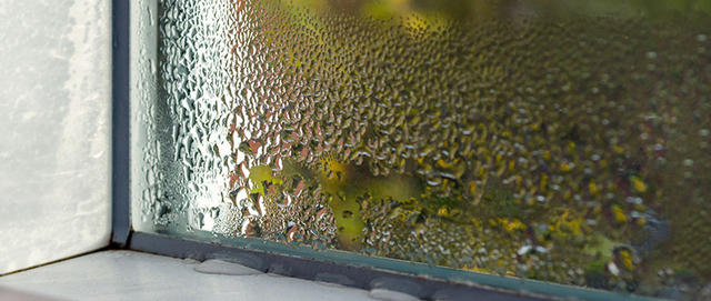 condensation on a window